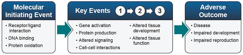 Example elements of an adverse outcome pathway