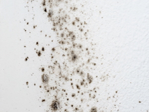 mold_graphic
