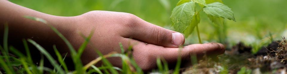 person's hand on the grass holding a plant