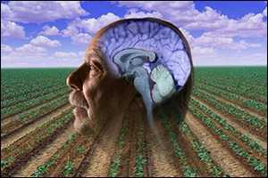 Image of exposed brain with a open field in the background