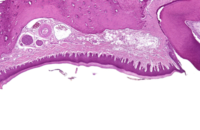 Oral Mucosa landing page image