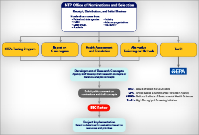 Diagram of the NTP Office of Nominations and Selection process
